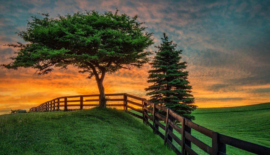 Два дерева на фоне заката